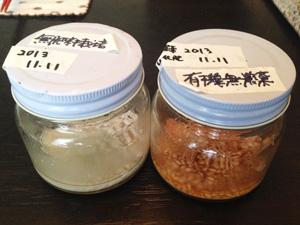 お米の腐敗実験
